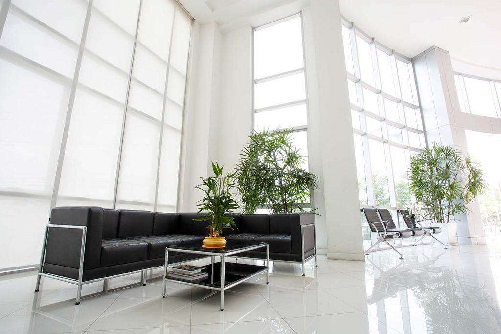 noleggio piante hotel