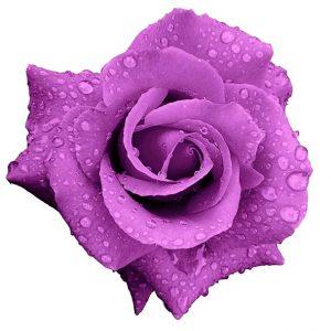 Risultato immagini per mazzo di rose rosa antiche