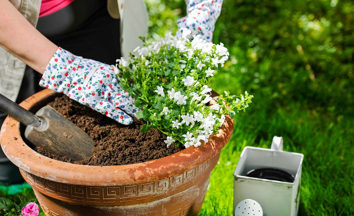 Vasi Interno Grandi Dimensioni come scegliere i vasi per piante? officina del verde verona