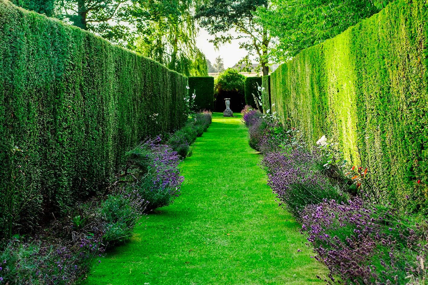 Siepi da giardino come realizzarle e renderle perfette for Piante di giardino