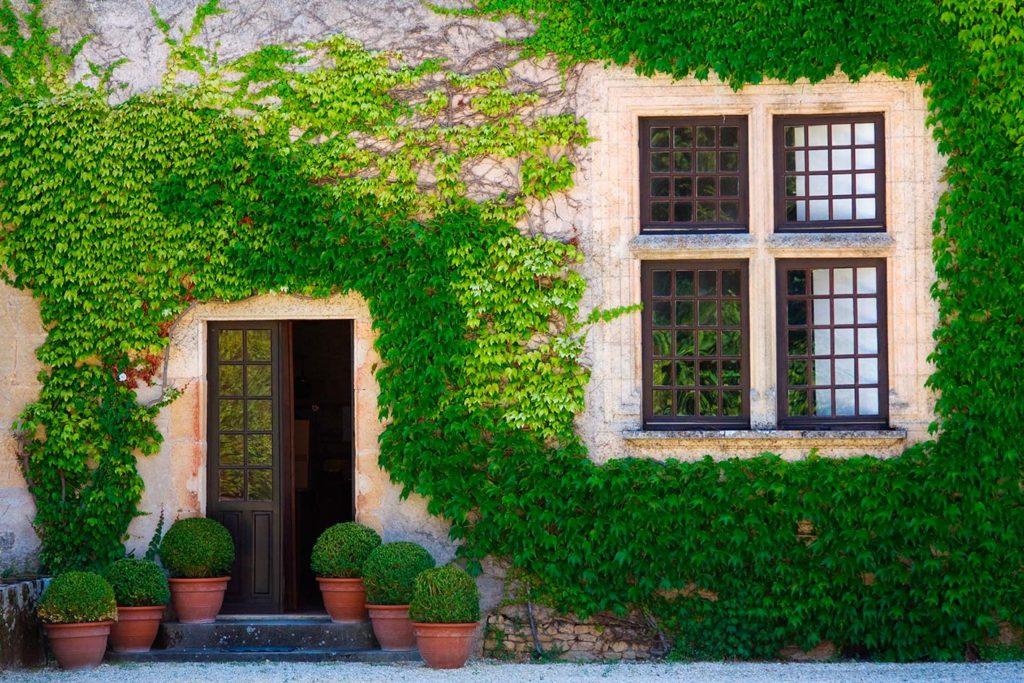 Piante rampicanti per i muri di casa e per balconi for Piante rampicanti