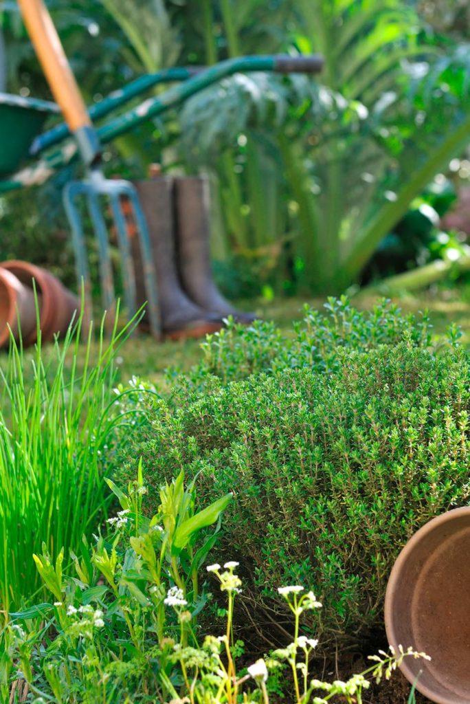 idee giardino piante aromatiche