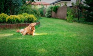 recintare giardino per cane