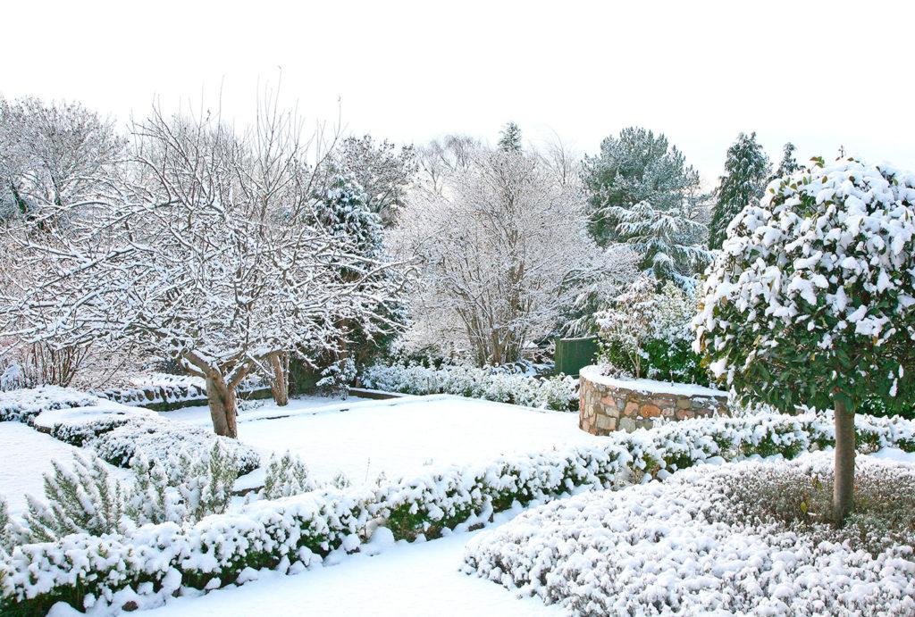 Come curare il giardino inverno